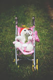 Baby carriage on the meadow on sunny summer day. Stock Image