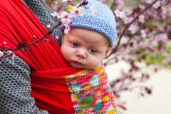 Baby carried in a sling scard in spring Stock Photo