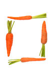 Baby carrot Royalty Free Stock Photography