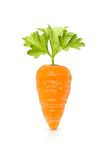 Baby carrot isolated Stock Image