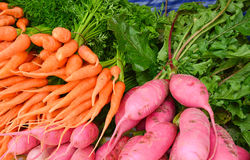 Baby carrot and pink turnip Stock Photography