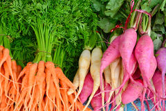 Baby carrot and pink turnip Stock Images