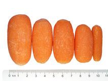 Baby carrots. And a scale, includes clipping path Royalty Free Stock Photos
