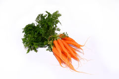 Baby carrots Royalty Free Stock Photos