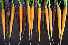 Baby Carrots in a Row Horizontal Top View Royalty Free Stock Image