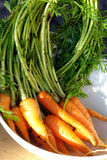 Baby carrots with tops. Freshly harvested baby carrots with green tops in a white bowl in the sunshine Stock Photos