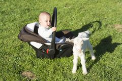 Baby in the carseat and little goat on grass. Baby in the car seat and little goat on grass Royalty Free Stock Photo