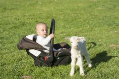 Baby in the carseat and little goat on grass play. Baby in the car seat and little goat on grass playing Stock Photos