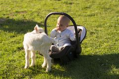 Baby in the carseat and little goat on grass play. Baby in the car seat and little goat on grass playing Royalty Free Stock Photo