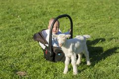 Baby in the carseat and little goat on grass play. Baby in the car seat and little goat on grass playing Stock Photography