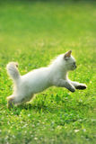 Baby cat. Funny cat that plays and jumping Royalty Free Stock Images