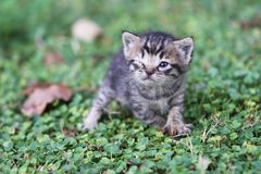 Baby cat Stock Photos