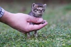 Baby cat Stock Photos