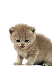 Baby cat Stock Photo