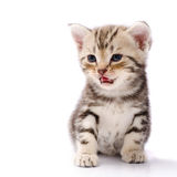 Baby Cat. On white background royalty free stock photography