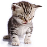 Baby Cat. On white background Stock Image