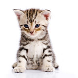 Baby Cat Stock Image