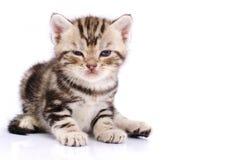 Baby Cat stock photography