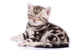 Baby Cat. On white background Stock Photos