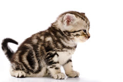 Baby Cat. On white background Stock Photo