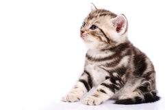 Baby Cat. On white background Royalty Free Stock Photos