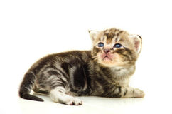 Baby Cat. On white background stock photography
