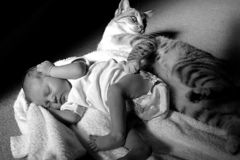 Baby and cat. Newborn baby girl sleeping next to a cat Royalty Free Stock Photo