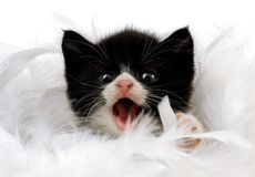Baby cat. Little, black-white tiered baby cat stock photo