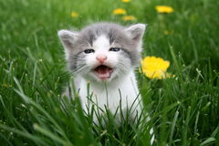 Baby cat Stock Images