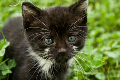 Baby Cat. Play in a grass field stock photo