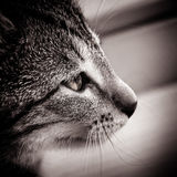 Baby Cat Black And White Stock Images