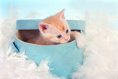 Baby cat in box Royalty Free Stock Images