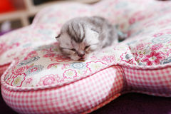 Baby cat Royalty Free Stock Photos