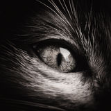 Baby Cat Eye Black And White Stock Photo