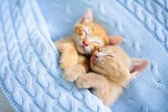 Free Baby Cat. Ginger Kitten Sleeping Under Blanket Stock Image - 155641371