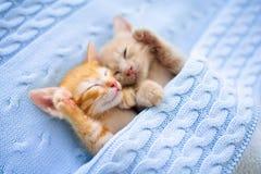 Free Baby Cat. Ginger Kitten Sleeping Under Blanket Stock Photos - 155641423