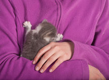 Baby cat Royalty Free Stock Photography
