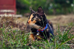 Baby cat. In grass fields Stock Image