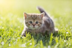 Baby cat in green grass royalty free stock image