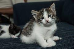 Baby cat having fun Royalty Free Stock Image