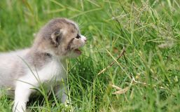 1 baby cat kitty in green grass. 1  kitty in  grass  2 or 3 months old Stock Photography