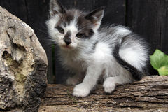 A baby cat. A little bicolor baby cat Stock Photo