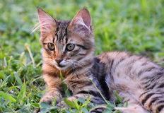 Baby cat lying on green grass. Stock Photo