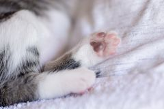 Baby cat paws stock image