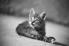 Baby cat play. Black and white Photography stock photo