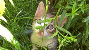 Baby Cat Playing In Grass stock footage