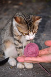 Baby cat playing with wool Stock Photo