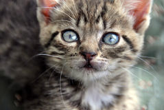 Baby cat portrait Royalty Free Stock Photography
