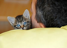 Baby cat portrait. Little baby cat sleeping on human shoulder Royalty Free Stock Image