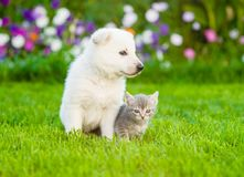 Baby cat and puppy sitting together on summer grass.  stock images